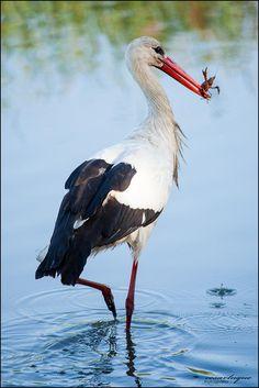 Big Bird, Small Birds, Pet Birds, Birds Voice, Shoebill Stork, Stork Bird, Ostriches, Backyard Birds, African Animals