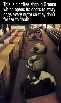 Faith in humanity restored big time! - A photo of stray dogs sleeping in a coffee shop to shelter themselves from the cold is going viral due to the compassion displayed in the image. Animals And Pets, Funny Animals, Cute Animals, Love My Dog, Puppy Love, Faith In Humanity Restored, Sleeping Dogs, Pitbull, In This World