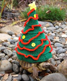 I have seen numerous suggestions for Russian tortoise diet Some great Some awful. Russian Tortoises are nibblers and appreciate broad leaf plants. Baby Tortoise, Sulcata Tortoise, Tortoise Care, Giant Tortoise, Tortoise Turtle, Tortoise Habitat, Merry Christmas Happy Holidays, Christmas Tree, Turtle Sweaters