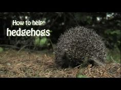 An Easy Wildlife Garden Project - How to help hedgehogs in your garden and get together more with your neighbours to help local wildlife