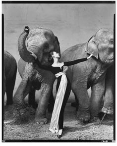 Dovima with Elephants by Richard Avedon 1955 featuring the first evening gown made by Saint-Laurent for Dior