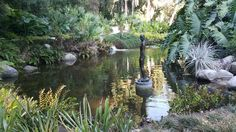 Huntington Museum, River, Plants, Outdoor, Outdoors, Plant, Outdoor Games, The Great Outdoors, Rivers