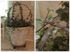 Kopallinen inspiraatiota: Muratit: Kesäkukkien jatkoaika