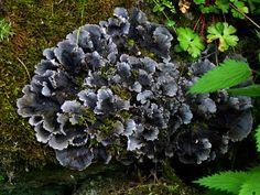 Une enquête sur les lichens forestiers en Auvergne et dans le Massif-Central