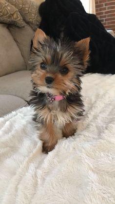 Sooooo adorable!