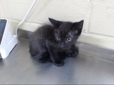 Animal Services has hundreds of adoptable pets at any given time. We operate on a first come, first serve basis to give everyone an equal opportunity. Kittens, Adoption, This Is Us, Pets, Florida, Animals, Cute Kittens, Foster Care Adoption, Animales