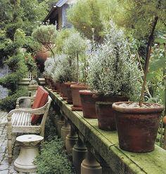 Michael Trapp's Conn. garden