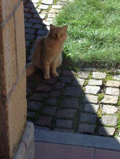 Beautiful anonymous cat  in my garden
