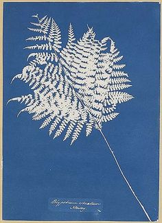 Search more than works and discover a range of Canadian and European art, renowned photographs, Inuit art, contemporary American art, and more. Botanical Illustration, Illustration Art, Illustrations, Forest Plants, Inuit Art, Cyanotype, Image Photography, Ferns, American Art