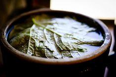 Grape leaves in barrel fermenting pickles