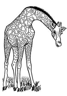 Click SHARE THIS STORY ON FACEBOOK Giraffen Mandala Vorlagen Malen Kunstunterricht Tiere