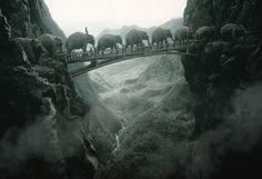 Elephants Crossing A bridge. a very small bridge