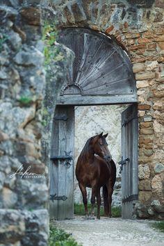 Welsh Pony Stute steht im Türrahmen einer alten Ruine |  Pferd | Bilder | Foto | Fotografie | Fotoshooting | Pferdefotografie | Pferdefotograf | Ideen | Inspiration | Pferdefotos | Horse | Photography | Photo | Pictures