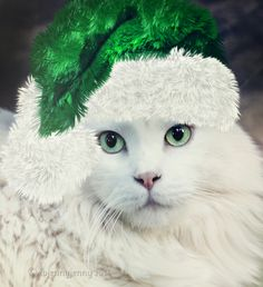 Christmas Portrait by ibjennyjenny on deviantART Christmas Kitten, Christmas Animals, Merry Christmas, Green Christmas, I Love Cats, Cute Cats, Animals And Pets, Cute Animals, Animals Planet