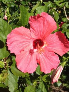 70 Best Florida Native Plants Images Florida Native