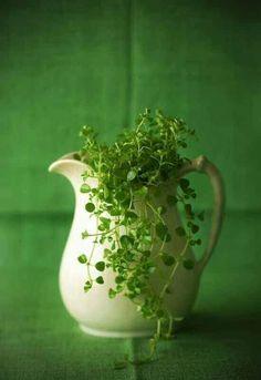 Rosamaria G Frangini   Green Emerald Desire  