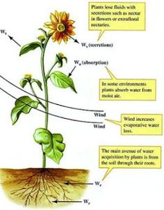 MCQ on Plant Physiology - Plant Water Relations ~ MCQ Biology - Learning Biology through MCQs