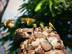 #africa one love birds a lot of yellow