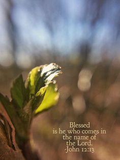Palm Sunday John 12:13