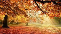Resultado de imagem para nature wallpaper for iphone