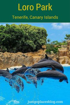 A dolphin show at Loro Park in Tenerife, a fun animal park for the whole family.