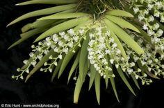 White Oak Orchids 2010 - Page 5