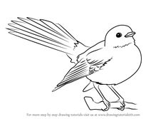 How to Draw New Zealand fantail - DrawingTutorials101.com