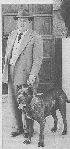 1940 Neapolitan Mastiff