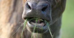 #Organic Meat and Milk Higher in Healthful Fatty Acids  http://crwd.fr/2viZUI4pic.twitter.com/uG0SJ06Udy