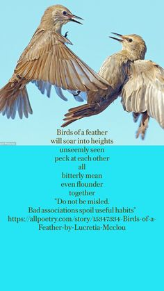 Eye Has Not Seen, Short Friendship Quotes, Fishing Quotes, The Heart Of Man, Nature Quotes, Writing Inspiration, Creative Writing, Bird Feathers, Birds