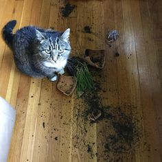 ...now clean this up human
