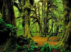 Enchanted Forest Washington state