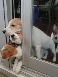 How many puppies does it take to open a sliding glass door?