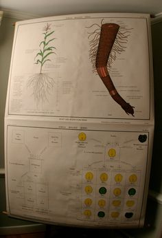 vintage nystrom science school pull down map instructional chart biology medical genetics (sale), via Etsy. $85.