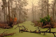 16. This is a swamp in Louisiana.