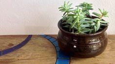 Vaso suculenta em cerâmica de alta temperatura