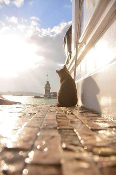 Istanbul İstanbul by Yaşar Koç Related pictures that will make you photos of optical illusions that really kick your ass offA New Chapter January 2018 I Love Cats, Crazy Cats, Cute Cats, Animals And Pets, Cute Animals, Foto Online, Photo Chat, Tier Fotos, All About Cats