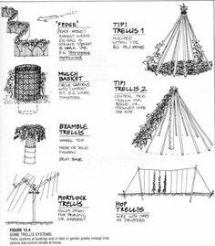 What Is Permaculture? : Going Green Success Tips Permaculture Design, Forest Garden, Veg Garden, Edible Garden, Vegetable Gardening, Garden Paths, Container Gardening, Trellis Design, Hops Trellis