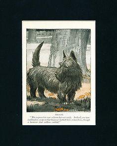 Dog-Print-1926-Scottish-Terrier-by-Charles-Livingston-Bull-ANTIQUE