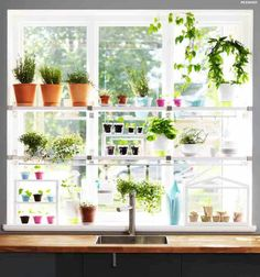 Want to do something like this in my kitchen...whether I can keep the plants alive is another matter.