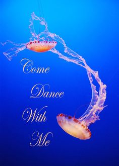 The quotation reads Come Dance With Me but when added to the graphic of two magnificent dancing jelly fish, it becomes an awesome beach wedding