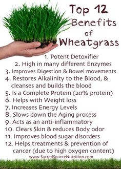 Ronda Rousey has a green shot every morning containing wheatgrass, parsley, cilantro and sprouts. This helps her cure her need of coffee! Check out the top 12 benefits of wheatgrass here.