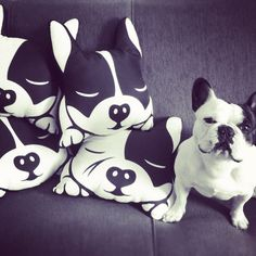 French Bulldog // Boston Terrier Pillow por PopDogStore en Etsy