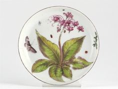 A Chelsea 'Hans Sloane' saucer, painted with a botanical specimen, a butterfly and smaller insects, a brown line rim, red anchor mark, c.1755