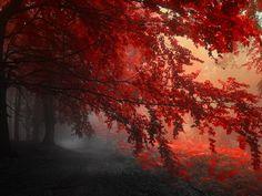 Red-Forest-Autumn-1920x1440.jpg (1920×1440)