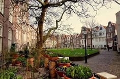 Reiseblog anderswohin - Just a traveller/ von Ulrich Kronenberg: Im Begijnhof in Amsterdam: Bei einer Mittelalterlichen Frauen-WG mit Geheimkirche und Grab in der Gosse