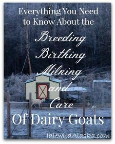 I have to write an essay on dairy and egg production. What to write?