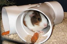 Buy The Right Size Guinea Pig Cage. Photo by maskarade Purchasing a guinea pig cage in a pet shop is unfortunately a good way to ensure that it is in fact too small for your pet's needs. Diy Guinea Pig Toys, Diy Guinea Pig Cage, Guinea Pig Hutch, Guinea Pig House, Baby Guinea Pigs, Guinea Pig Care, Pet Pigs, Hamsters, Rodents