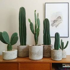 Succulent Olive Branch Arrangement & C. Portuguese Water Vessel Fresh assortment of Cacti in a locally sourced wooden planter box. Delivered Daily in NYC Faux Prickly Pear Cactus Plant Green leaf branches on a white wall Indoor Cactus Plants, Cactus House Plants, Green Cactus, Cactus Art, Cacti Garden, Fake Cactus, Cactus Drawing, Decoration Cactus, Decoration Plante