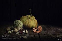 Autumn by ilebrajnik